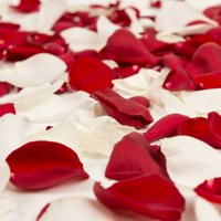 Natural Fresh Flowers - Red and White Rose Petals, Approximately 3000 petals