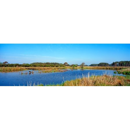 Lake At Chincoteague National Wildlife Reserve Chincoteague Island Virginia Usa Canvas Art   Panoramic Images  12 X 36
