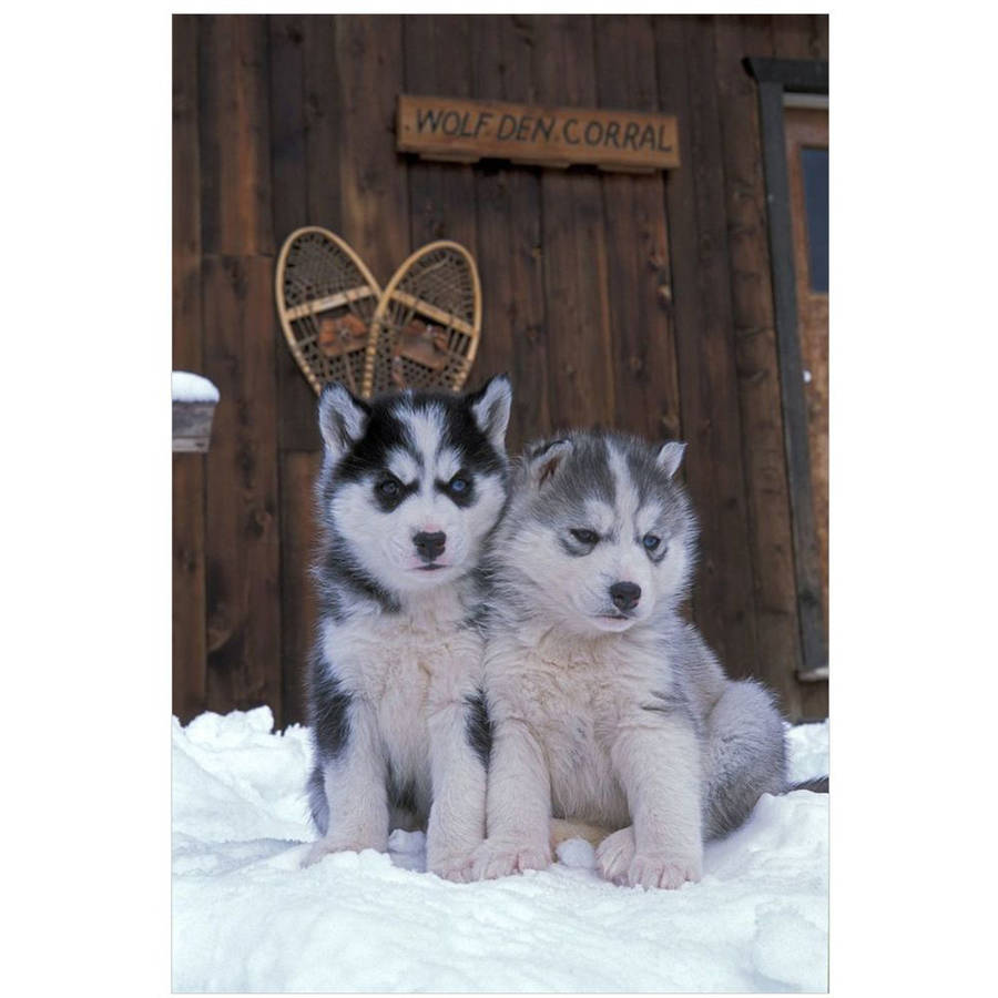 Two Siberian Husky Puppies Sitting In The Snow by Eazl Cling