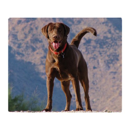 58a6ef55d86b CafePress - Lovable Chocolate Lab - Soft Fleece Throw Blanket, 50 ...