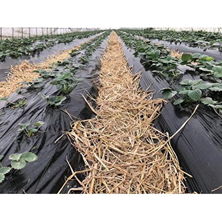 Image of Agfabric 0.6mil Landscape Gardening Film Embossed Plastic Mulch Strawberry Tomato Potato Weed Barrier,Ground Cover,Polyethylene Sheeting, 3.3x300ft, Black