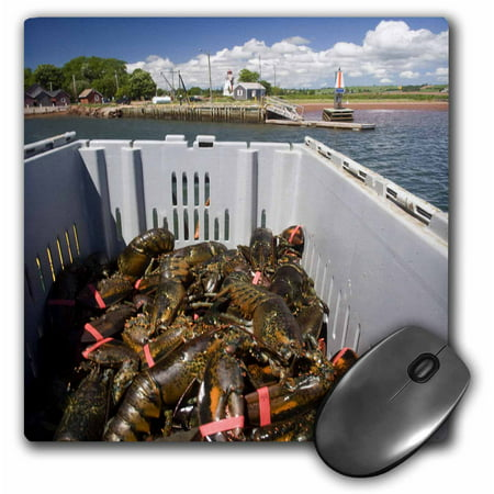 3dRose Prince Edward Island, Victoria. Lobster catch, fishing-CN09 DBR0006 - Dave Bartruff, Mouse Pad, 8 by 8 (Best Way To Catch Mice In Home)