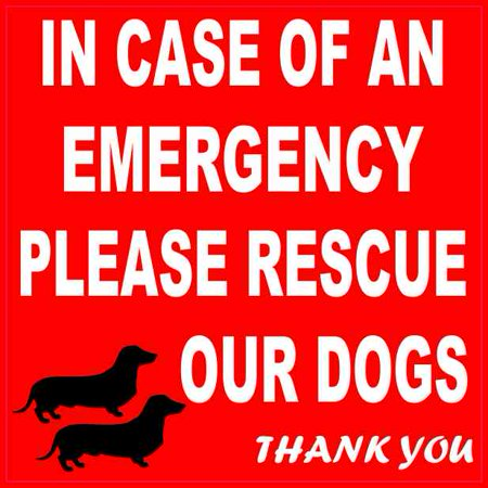 4in x 4in Dachshund Please Rescue Our Dogs Magnet