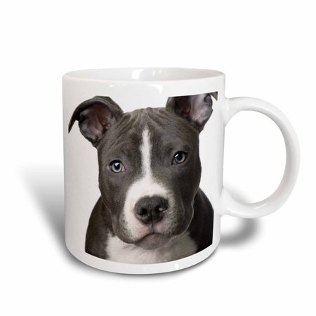 3dRose American Pit Bull Terrier Puppy, Ceramic Mug, 11-ounce