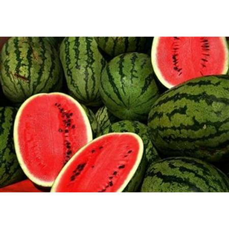 Charleston Gray Watermelon Seeds (heirloom variety) - 1