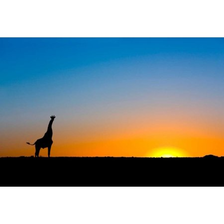Giraffe silhouetted against the setting sun Lethiau Valley Central Kalahari Game Reserve Botswana Poster Print by Vincent Grafhorst