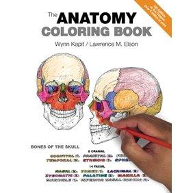 Dental Anatomy Coloring Book - Walmart.com