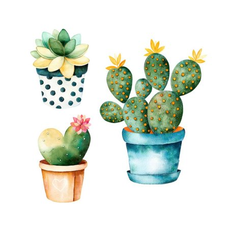 Cactus watercolor. Handpainted plant and succulent