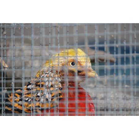 - Peel-n-Stick Poster of Colorful Cage Grid Caught Bird Zoo Animal Poster 24x16 Adhesive Sticker Poster Print