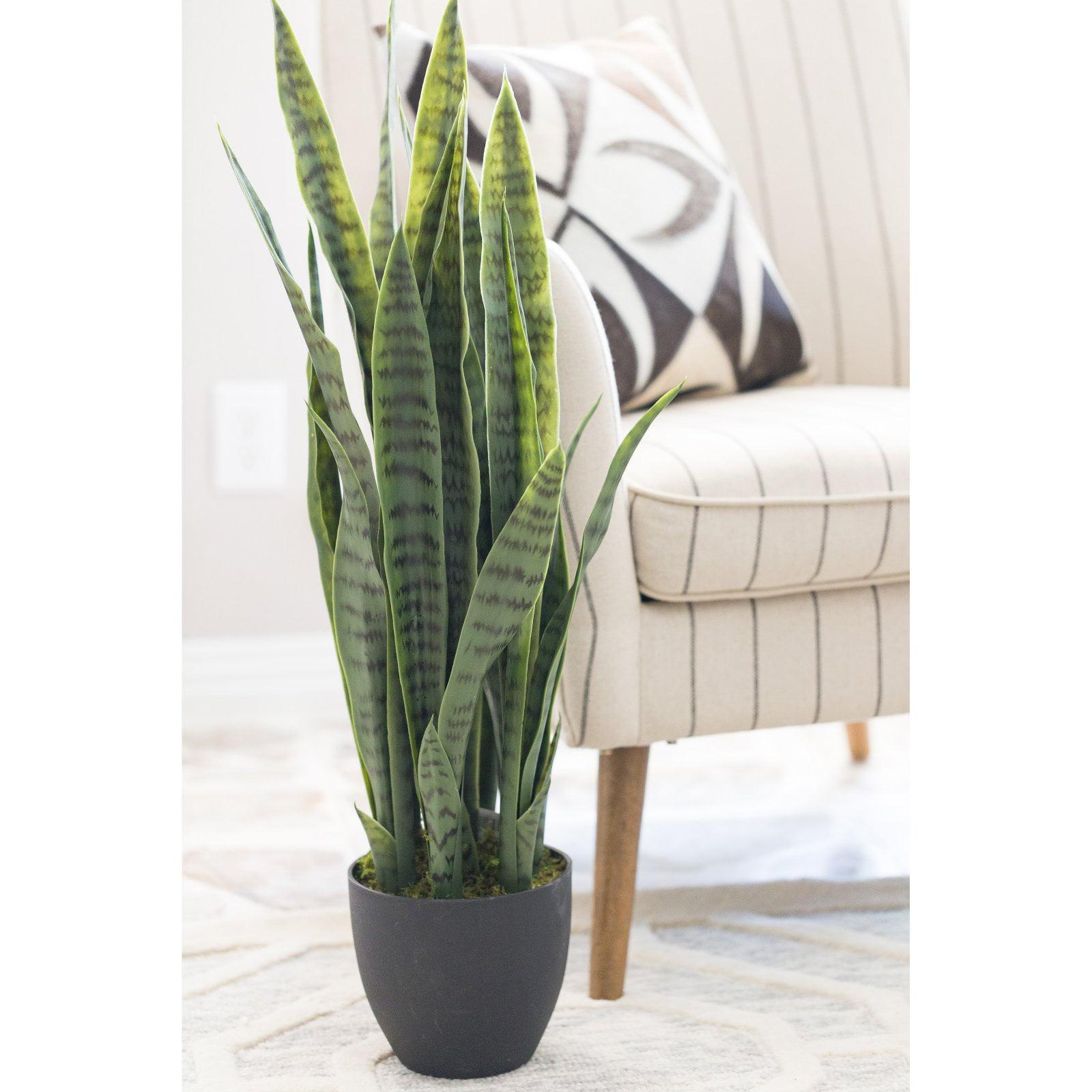 Sansevieria w//Black Planter