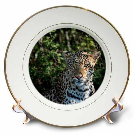 3dRose Leopard portrait, close up - Porcelain Plate, -