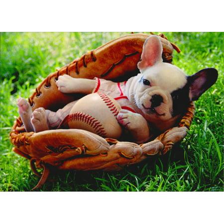 Funny Baby Animal (Avanti Press Puppy In Baseball Mitt Funny Dog New Baby)
