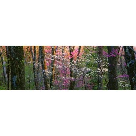 Virginia Shenandoah National Park Canvas Art   Panoramic Images  37 X 12