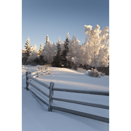 Winter Scenic Of Split Rail Fence And Frosted Spruce And Birch Trees In The Background In Southcentral Alaska Canvas Art - Jeff Schultz  Design Pics (22 x 34)