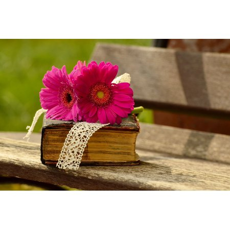 LAMINATED POSTER Bloom Flower Pink Blossom Gerbera Bank Romantic Poster Print 24 x 36