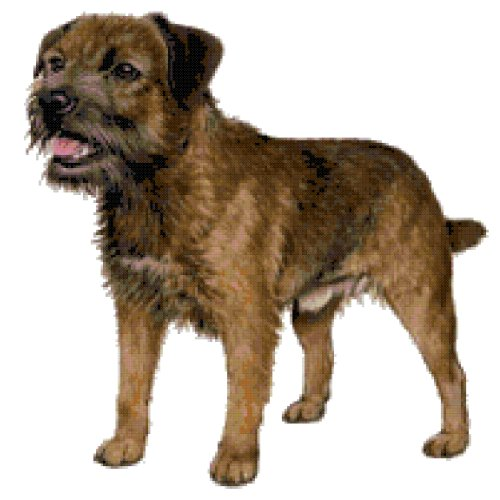 Border Terrier Dog Counted Cross Stitch Pattern