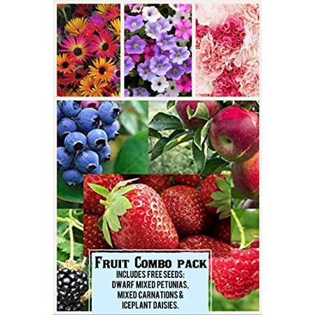 Fruit Combo Pack Raspberry, Blackberry, Blueberry, Strawberry, Apple (Organic) 525+ Seeds 658921943359 Free 3 Flower Packs Free Flower Seeds