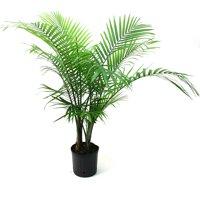 Delray Plants Majesty Palm (Ravenea rivularis) Easy to Grow Live House Plant, 10-inch Grower?s Pot