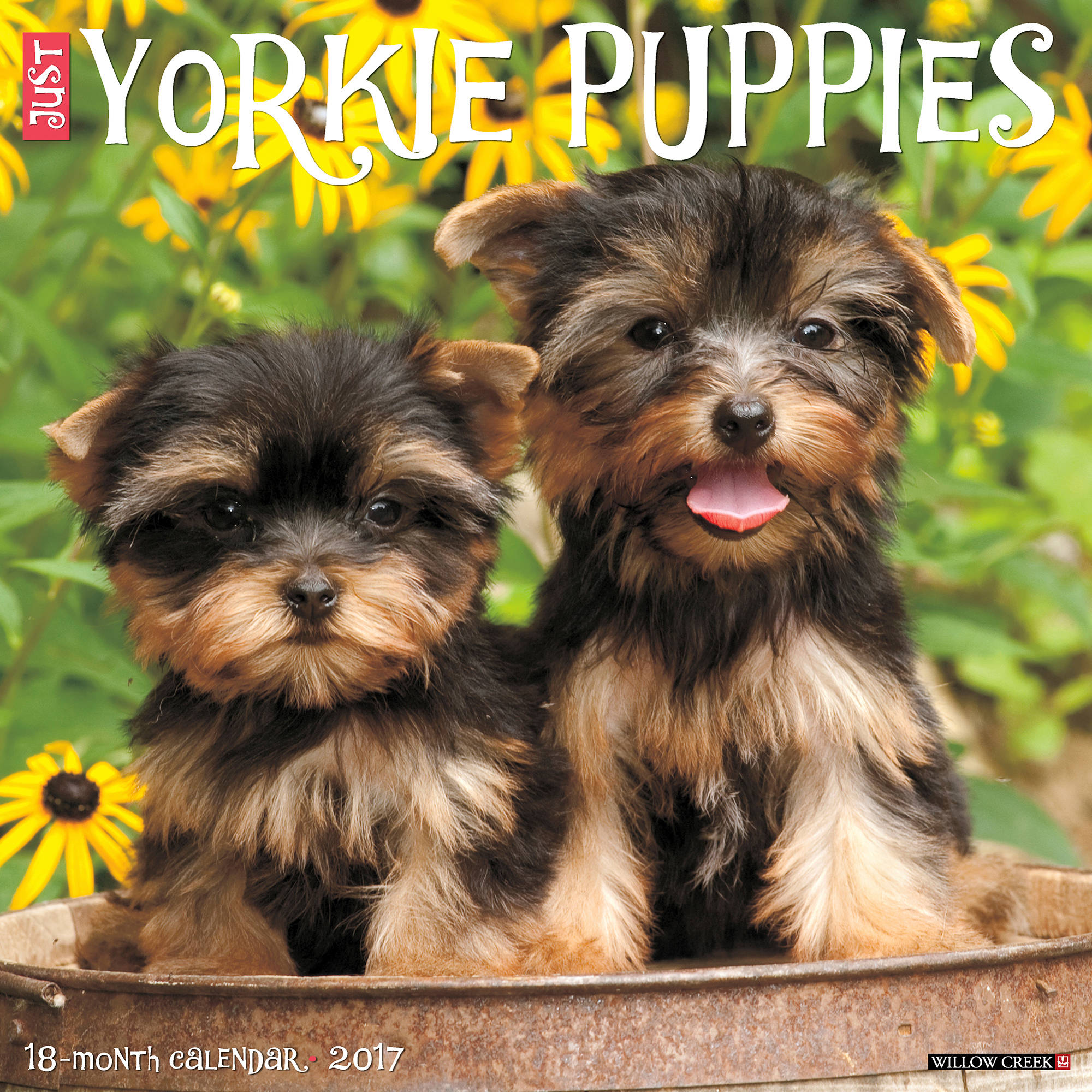 2017 Just Yorkie Puppies Wall Calendar