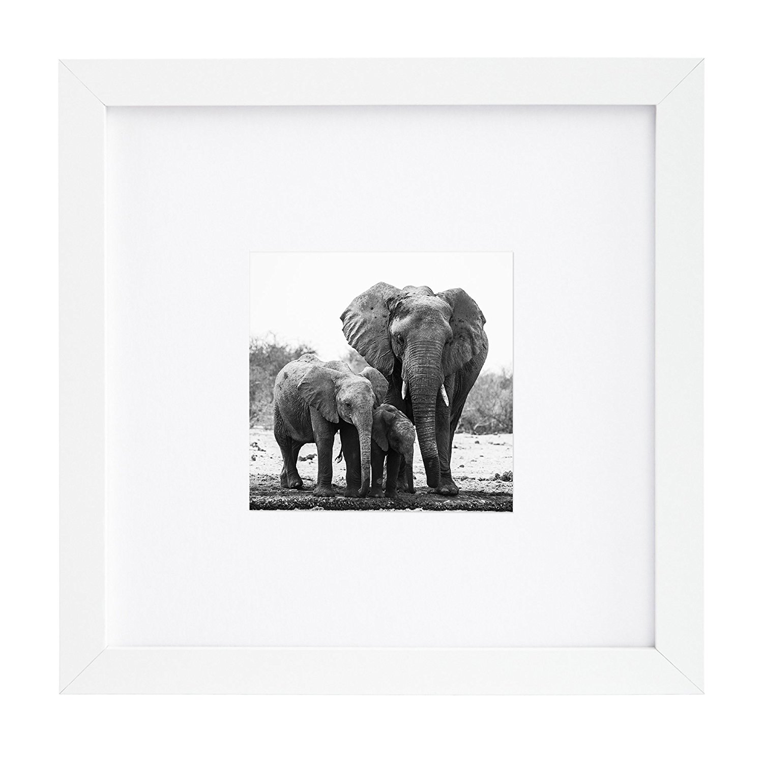 8x8 White Picture Frame Matted to Fit Pictures 4x4 Inches or 8x8 Without Mat by Americanflat