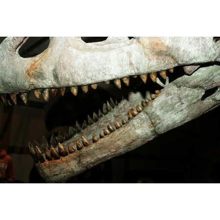Canvas Print Skull Bone Teeth Dinosaur Fossils Tooth Skeleton Stretched Canvas 10 x 14 (Teeth Skeleton)