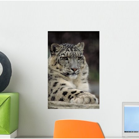 Snow Leopard Wall Mural by Wallmonkeys Peel and Stick Graphic (12 in H x 8 in W) WM105561](Stick Snow)