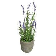 Northlight Seasonal Decorative Artificial Potted Lavender Desk Top Plant in Pot