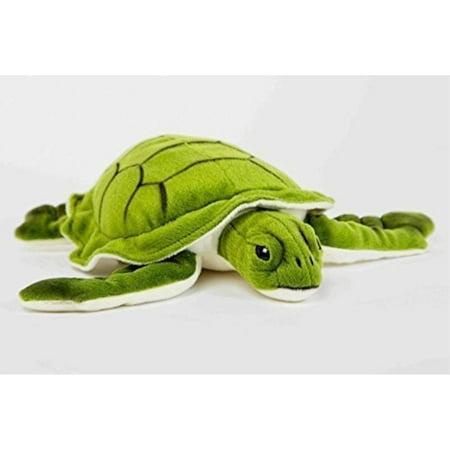 Sea Turtle 11