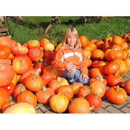 Peel-n-Stick Poster of Pumpkin Orange Child Autumn Nature Halloween Poster 24x16 Adhesive Sticker Poster - Halloween Kids Posters