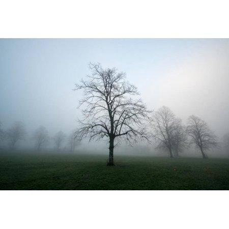 Misty Dawn, Victoria Park, Bristol, England, United Kingdom, Europe Print Wall Art By Bill