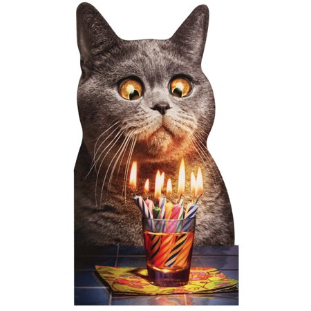 Avanti Press Cat Flaming Shot Funny Birthday Card - Flaming Halloween Shots