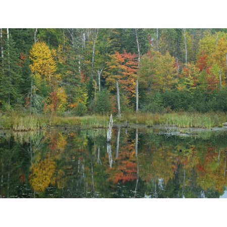 Autumn Colors in Algonquin Provincial Park, Ontario Print Wall Art By Tim