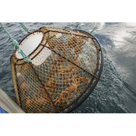 Crab Pot With Brown Crab Is Hauled Up Over The Side Of The FV Morgan Anne During The Commercial Brown Crab Fishing Season In Icy Strait Of Southeast Alaska Canvas Art - Chris Miller  Design Pics (17 (The Game Ft Chris Brown Pot Of Gold)
