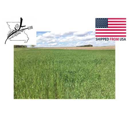 10 lb Wrens Abruzzi Cereal Rye Seed Non-GMO Grain Deer Food Plot Winter Grazing Cattle Game Wildlife Seeds By JL Missouri Parts thumbnail