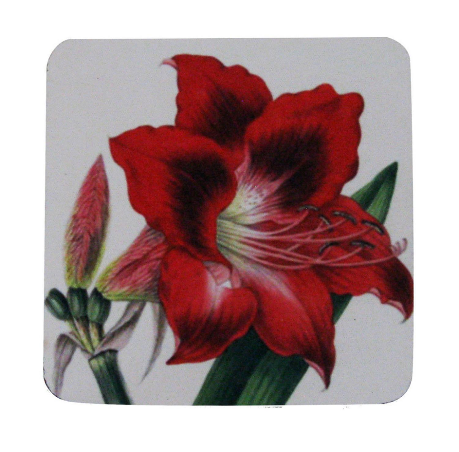 Pack of 8 Absorbent Antique Style Botanical Amaryllis Cocktail Drink Coasters 4""