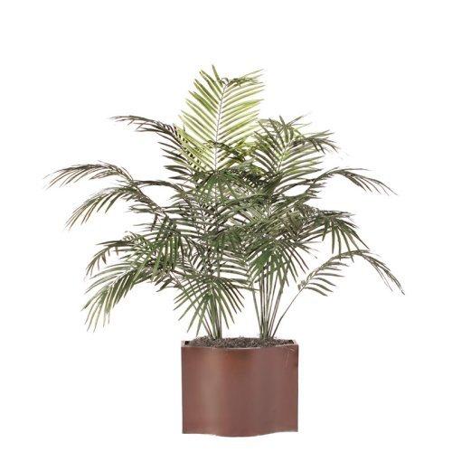 5 ft. Dwarf Palm Tree