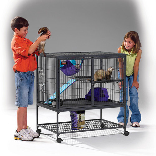 Ferret Nation Single Unit with Stand