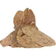 Fluker's Catappa Leaves for Hermit Crabs (Pack of 5)