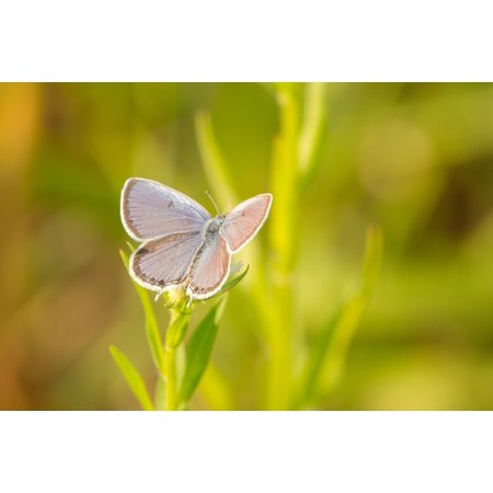 LAMINATED POSTER Summer Park Outdoor Butterfly Nature Insect Poster Print 24 x 36