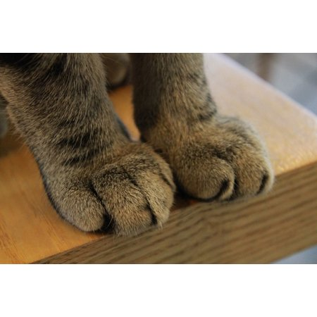 Canvas Print Kitty Claw Paw Feline Mammal Cat Claws Paws Stretched Canvas 10 x 14 - Kitty Paw