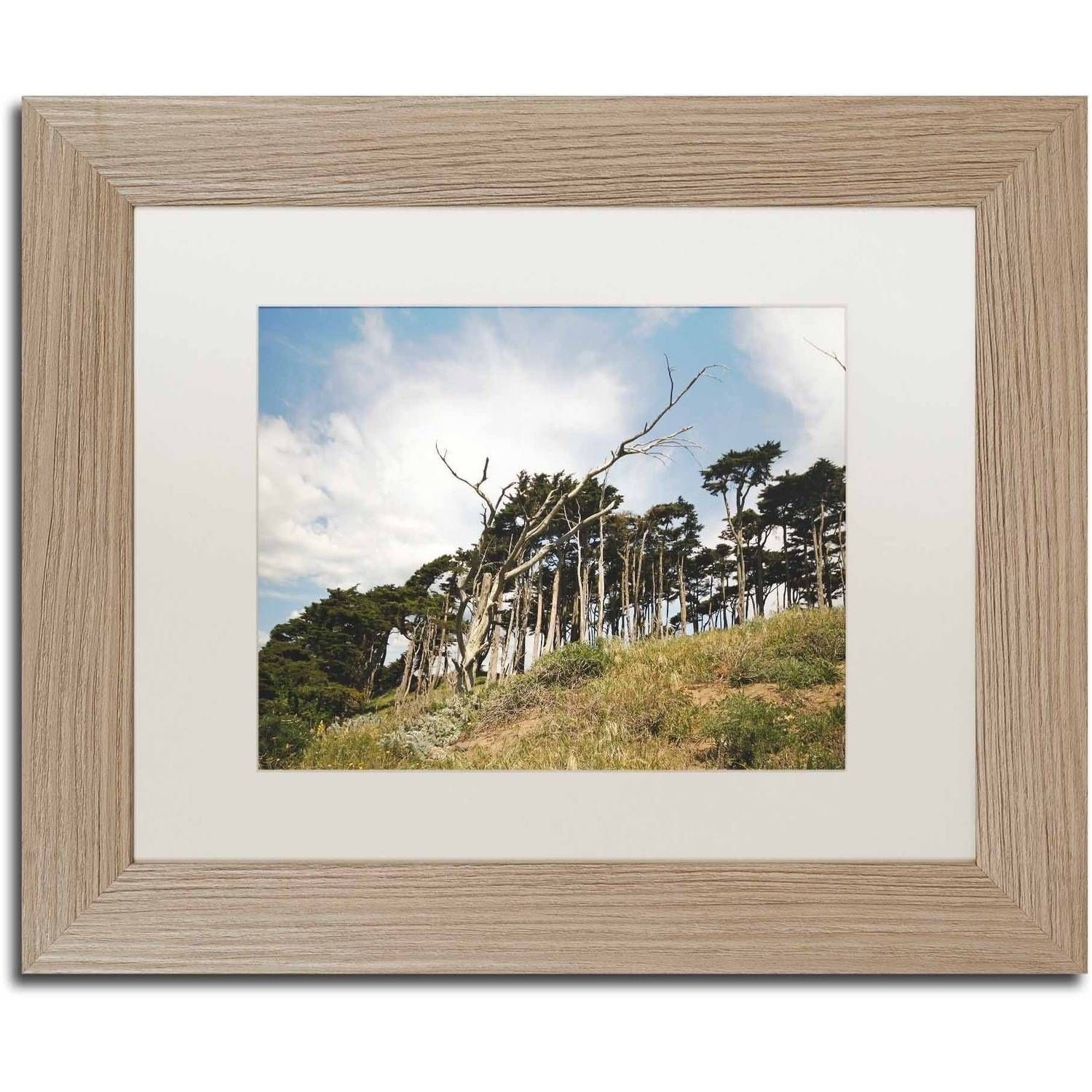 Trademark Fine Art 'Presidio Trees' Canvas Art by Ariane Moshayedi, White Matte, Birch Frame