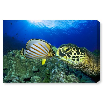 Oliver Gal Green Sea Turtle Canvas Art