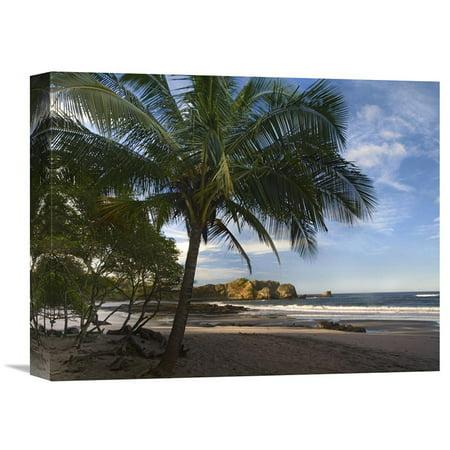 Global Gallery Palm Trees Line Pelada Beach Costa Rica Wall Art