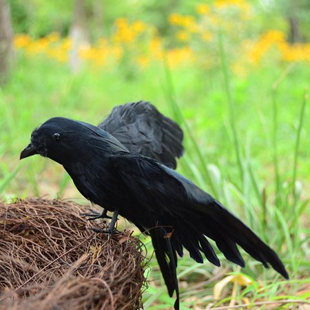 Lifelike Scary Raven Crow Prop Simulated Crow Realistic Bird Home Decoration Halloween - image 3 of 4
