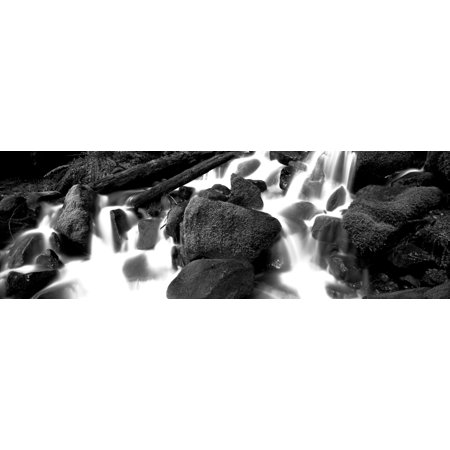 Cascading waterfall in a rainforest Olympic National Park Washington State USA Canvas Art - Panoramic Images (6 x