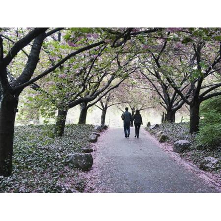 Spring Cherry Blossom, Brooklyn Botanical Garden, Brooklyn Print Wall Art By Christian - Botanical Gardens Brooklyn Halloween