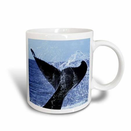 3dRose Humpback Whale, Megaptera Novaenglie, Silver Banks, Caribbean, Dominican Republic, Ceramic Mug, 11-ounce