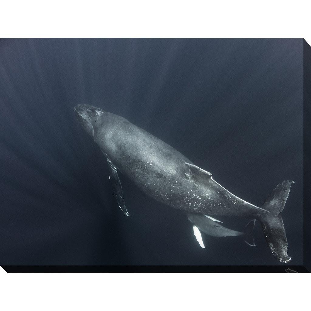 Craig Dietrich 'Feeding' Underwater Photography Canvas Wall Art 30 in. x 40 in. x 1.5 in.