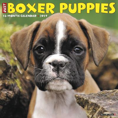 Just Boxer Puppies 2019 Calendar