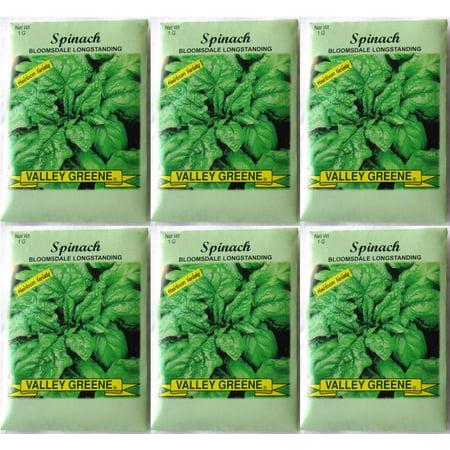 Valley Greene (6 Pack) 1 gram/Package Bloomsdale Longstanding Spinach Heirloom Variety Seeds ()